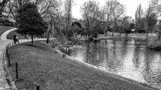 Parisian Version Of Swan Lake , By Tara Korlov